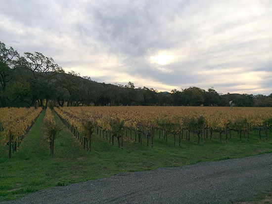 The Fay Vineyard